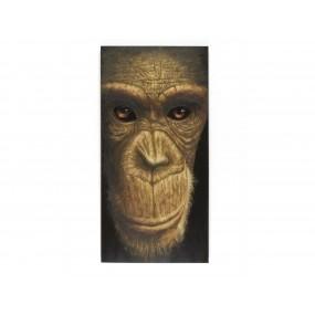 Obraz Šimpanz